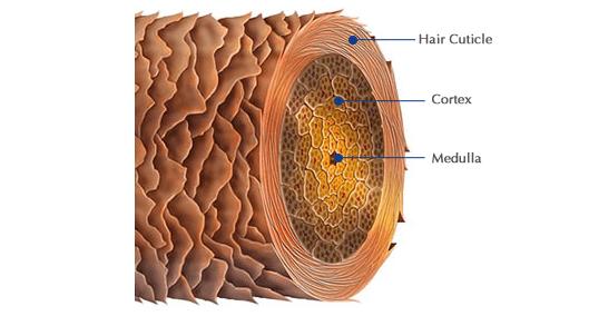 Секреты волос: что влияет на их качество